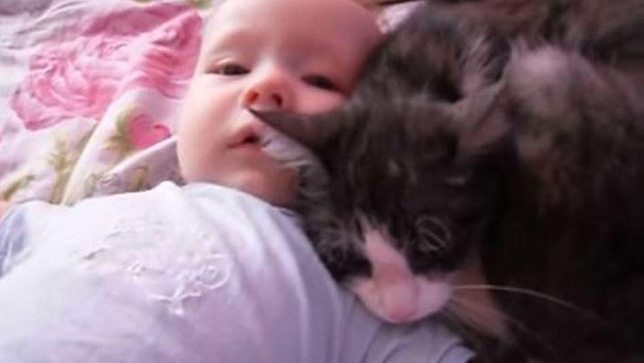 Gatto consola il bambino che piange: il video virale