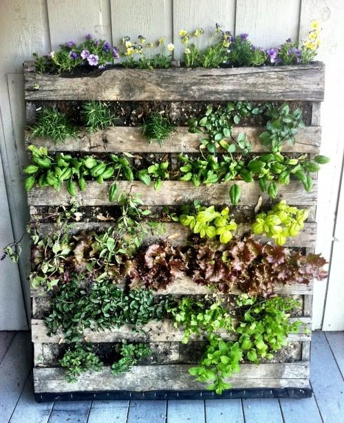 idee green per la casa serra verticale fai da te
